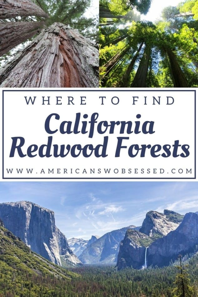best place to see redwoods