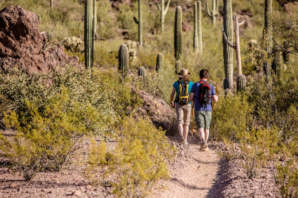 best things to do in Saguaro National Park Arizona